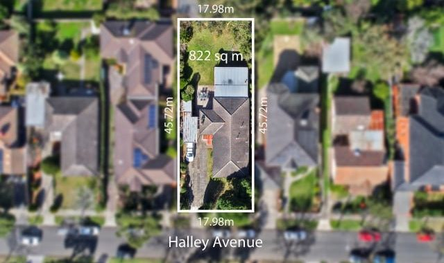 22 Halley Avenue Camberwell - 2